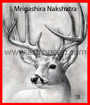 Mrigashira Nakshatra - The constellation of Mrigasira